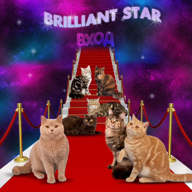 http://web-rai.ru/images/site/Raboty/2010/bs-cats_3.jpg