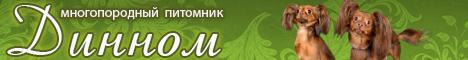http://web-rai.ru/images/site/Raboty/2012/468x60_dinnom1.jpg