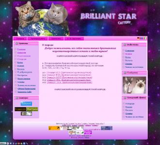 http://web-rai.ru/images/thumbnails/images/site/Raboty/2010/brilstar-330x300.png